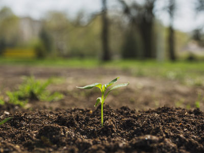 terrains-agricoles